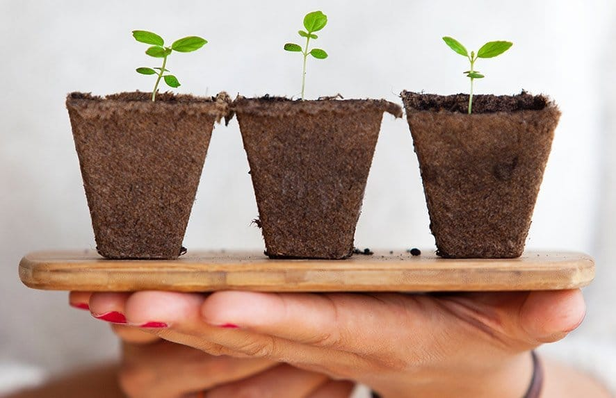hemp seeds hidden benefits